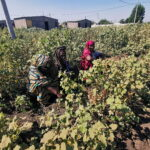Can agriculture be Ethiopia's growth engine?